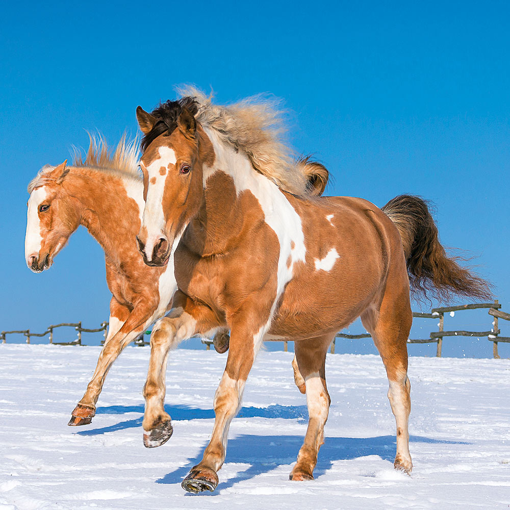 Horses by Christiane Slawik Calendar 2018 by Presco Group inside 8595054248222
