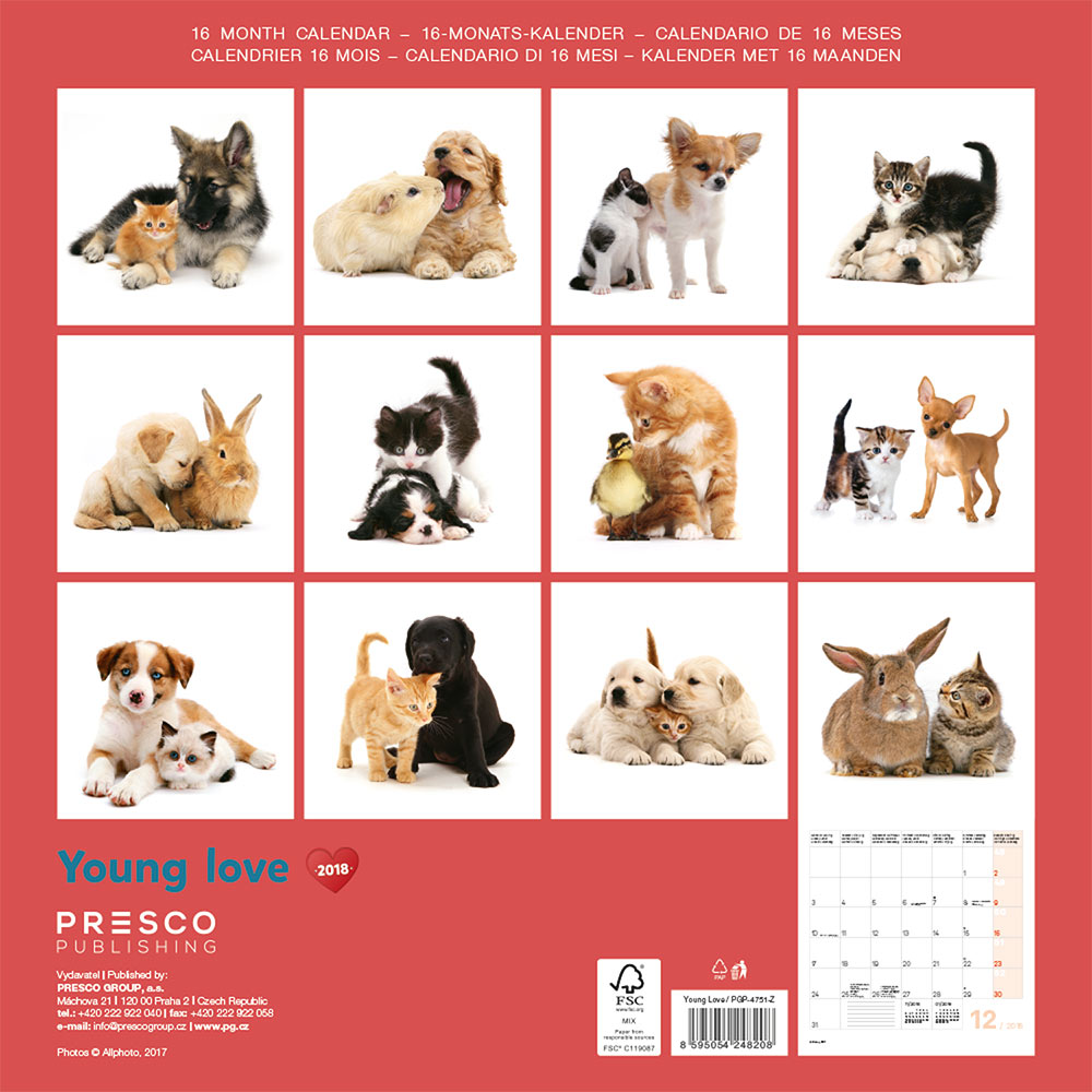 Young Love Kittens and Puppies Calendar 2018 by Presco Group back 8595054248208