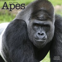 Apes Wall Calendar 2018 by Avonside