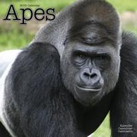 Apes Wall Calendar 2018 by Avonside