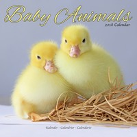 Baby Animals Wall Calendar 2018 by Avonside