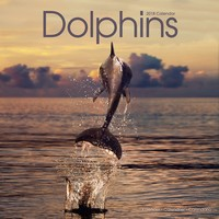 Dolphins Wall Calendar 2018 by Avonside