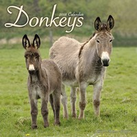 Donkeys Wall Calendar 2018 by Avonside