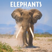 Elephants Wall Calendar 2018 by Avonside