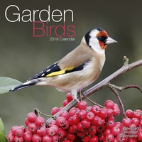 Garden Birds Wall Calendar 2018 by Avonside