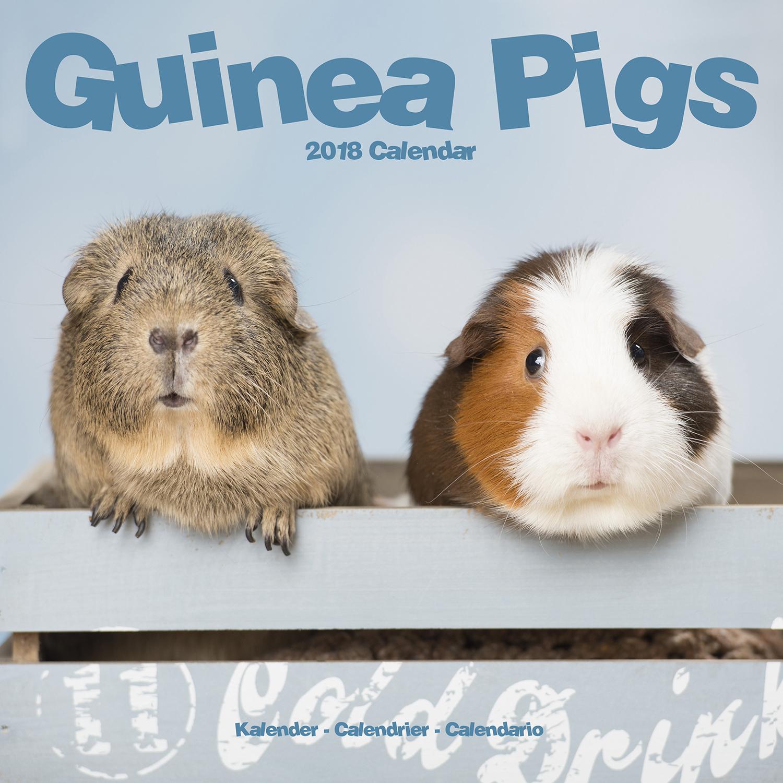 guinea pigs calendar 2018 pet prints inc