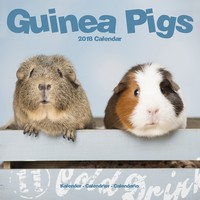 Guinea Pigs Wall Calendar 2018 by Avonside