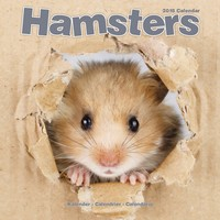 Hamsters Wall Calendar 2018 by Avonside