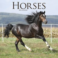 Horses Wall Calendar 2018 by Avonside
