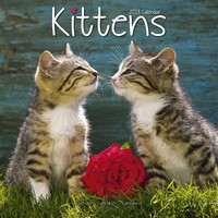 Kittens Wall Calendar 2018 by Avonside