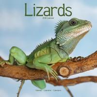 Lizards Wall Calendar 2018 by Avonside