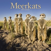 Meerkats Wall Calendar 2018 by Avonside