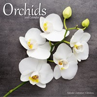 Orchids  Wall Calendar 2018 by Avonside
