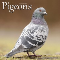 Pigeons Wall Calendar 2018 by Avonside
