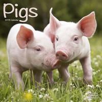 Pigs Wall Calendar 2018 by Avonside