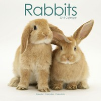 Rabbits Wall Calendar 2018 by Avonside