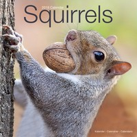 Squirrels Wall Calendar 2018 by Avonside