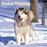 Alaskan Malamute Wall Calendar 2018 by Avonside