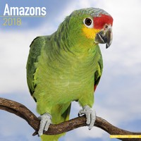 Amazons Wall Calendar 2018 by Avonside