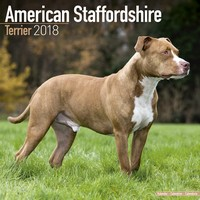 American Staffordshire Terrier Wall Calendar 2018 by Avonside