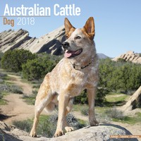 Australian Cattle Dog Wall Calendar 2018 by Avonside