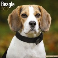 Beagle Wall Calendar 2018 by Avonside