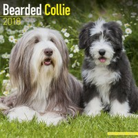 Bearded Collie Wall Calendar 2018 by Avonside