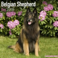 Belgian Shepherd Dog Wall Calendar 2018 by Avonside