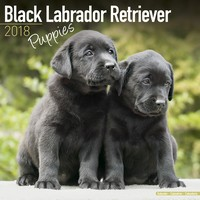 Labrador Retriever Puppies Wall Calendar (Black) 2018 by Avonside