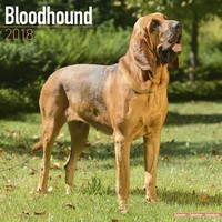 Bloodhound Wall Calendar 2018 by Avonside