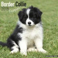 Border Collie Puppies Wall Calendar 2018 by Avonside