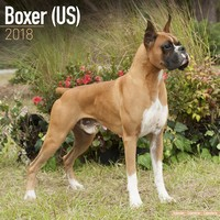 Boxer (US) Wall Calendar 2018 by Avonside
