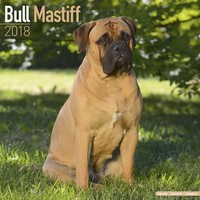 Bull Mastiff Wall Calendar 2018 by Avonside