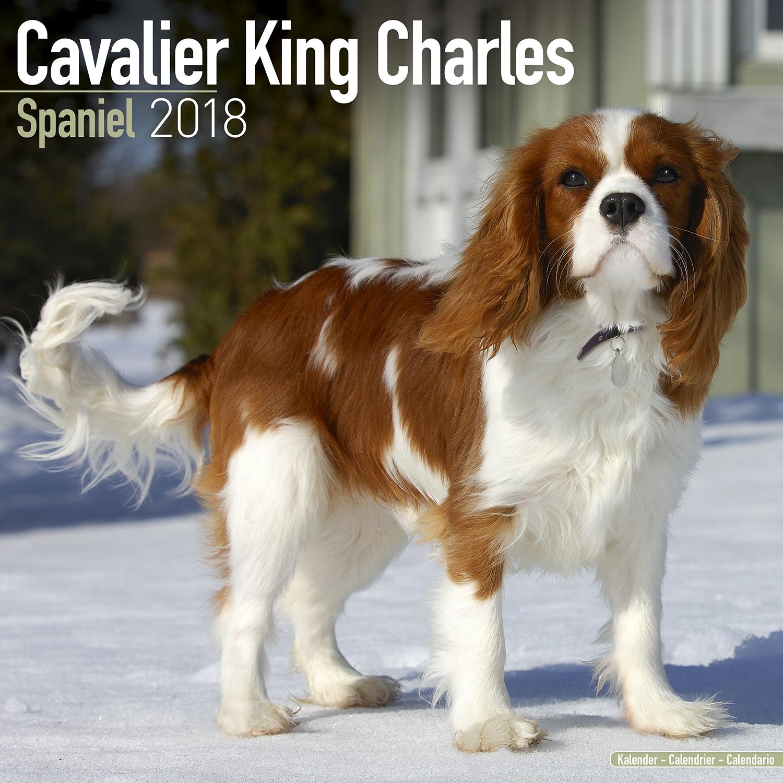 Cavalier King Charles Calendar 2018 | Pet Prints Inc.