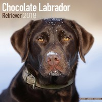 Labrador Retriever Wall Calendar (Chocolate) 2018 by Avonside