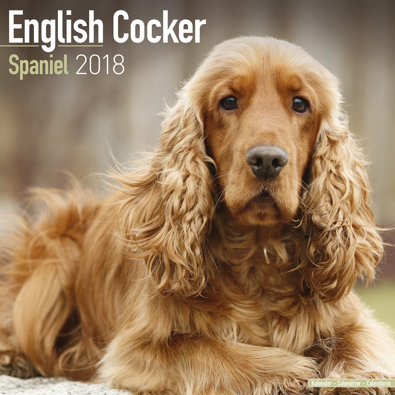 cocker spaniel calendar 2018 pet prints inc