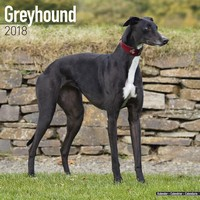 Greyhound Wall Calendar 2018 by Avonside