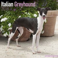 Italian Greyhound Wall Calendar 2018 by Avonside