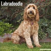 Labradoodle Wall Calendar 2018 by Avonside