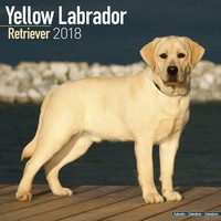 Labrador Retriever Wall Calendar (Yellow) 2018 by Avonside