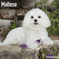 Maltese Wall Calendar 2018 by Avonside