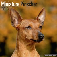 Miniature Pinscher Wall Calendar 2018 by Avonside