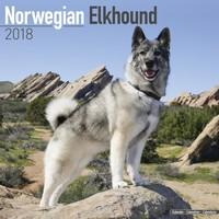 Norwegian Elkhound Wall Calendar 2018 by Avonside