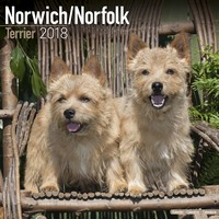Norwich/Norfolk Terrier Wall Calendar 2018 by Avonside