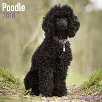 Poodle Wall Calendar 2018 by Avonside
