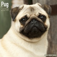 Pug Wall Calendar 2018 by Avonside