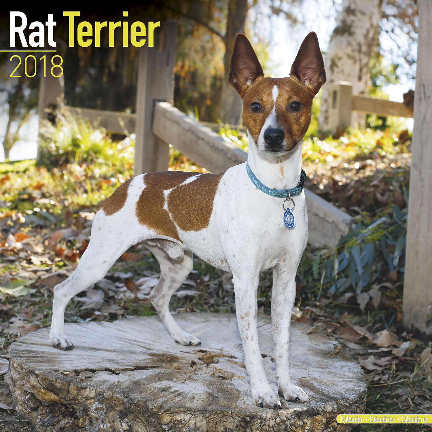 rat terrier price rat terrier calendar 2018 pet prints inc 5626