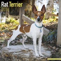 Rat Terrier Wall Calendar 2018 by Avonside