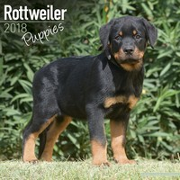 Rottweiler Puppies Wall Calendar 2018 by Avonside