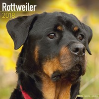 Rottweiler Wall Calendar 2018 by Avonside